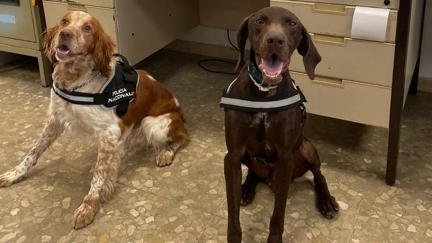 Isco y Cronos: los perros policías que olieron un millón de euros en un control en Málaga