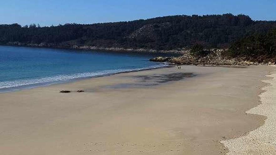 Usuarios de las playas de Barra y Viñó denuncian la presencia de perros peligrosos y la falta de limpieza