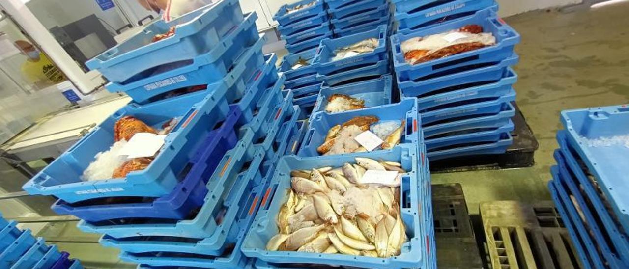Cajas repletas de diferentes tipos de pescado dispuestas para la venta en la Llotja.   JOAN GIMENO