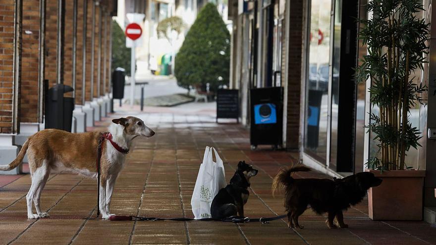 Avilés sancionará con hasta 3.000 euros a quienes inciten a sus mascotas a atacar