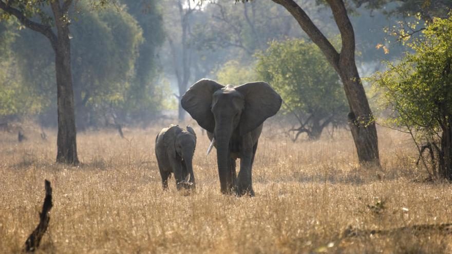 Dos turistas mueren aplastados por un elefante