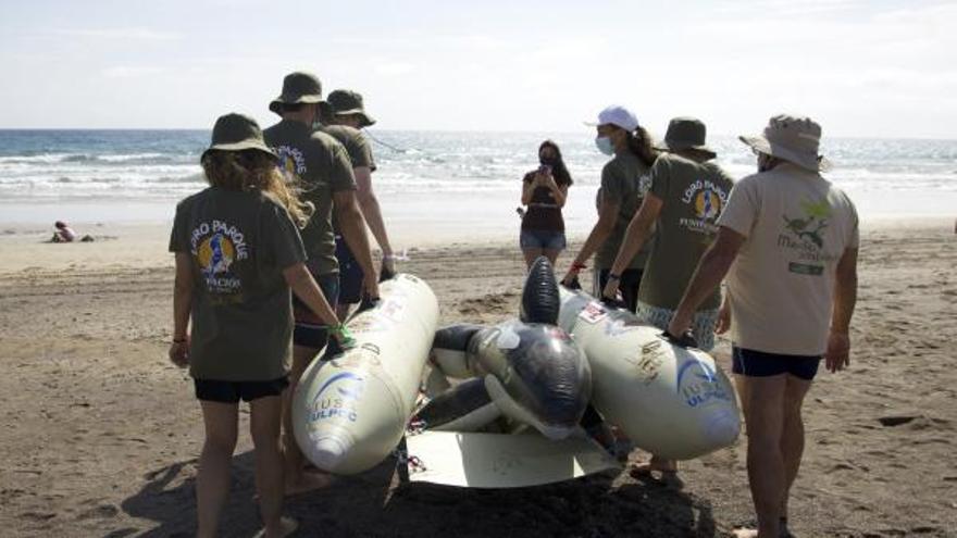 La ULPGC colabora en un simulacro de varamiento masivo de cetáceos