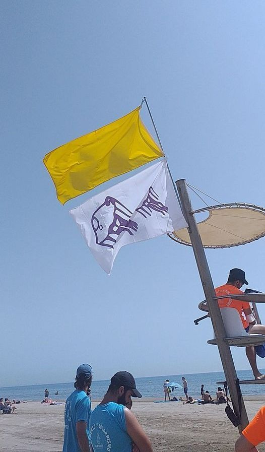 Bandera amarilla por medusas en Alboraia