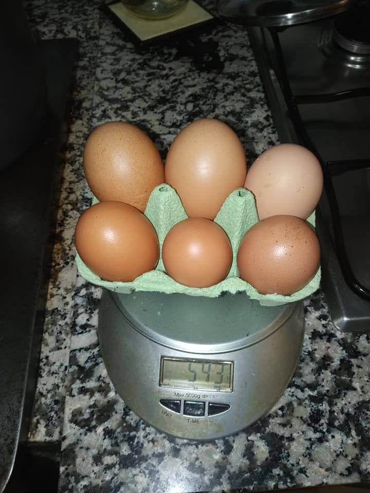 Los huevos de Corao, pesados.