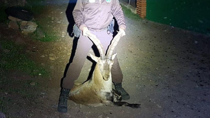 Condenan a un furtivo que abatió una cabra montés en Alfarnatejo