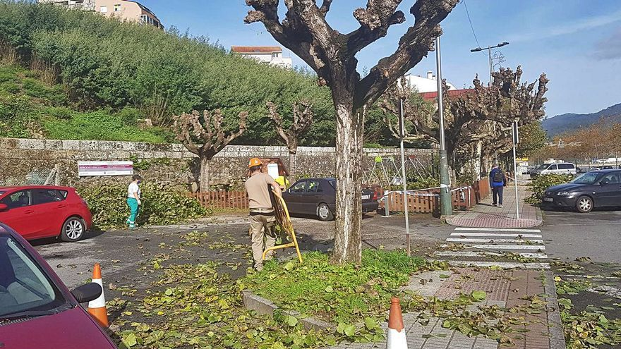 Las podas intensivas del otoño en Moaña