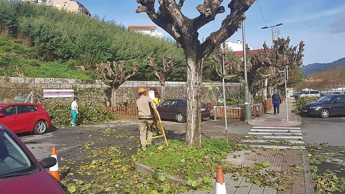 Las podas intensivas del otoño en Moaña | F.G.S.