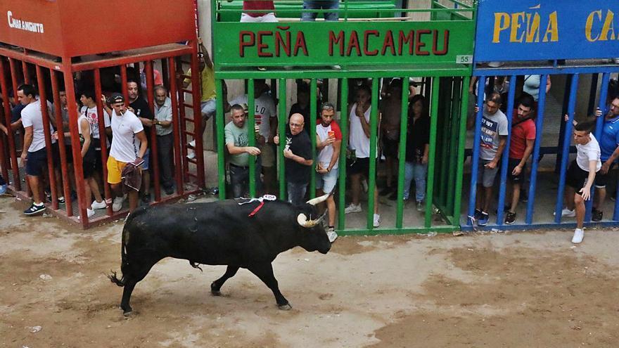 """Los taurinos exigen la vuelta """"imperiosa""""  de los festejos"""