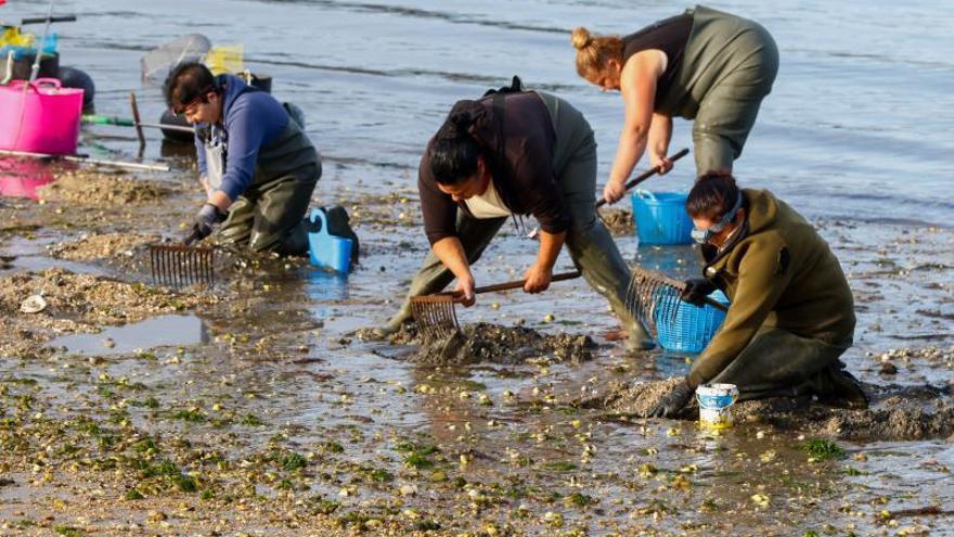 """Las mariscadoras de Carril, tras un año de 'sequía': """"Cogimos el cupo pero con gran esfuerzo"""""""