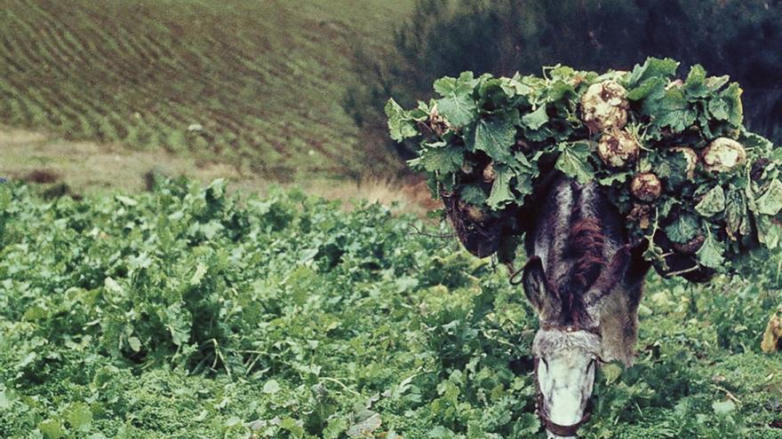 A vida lenta. Memorias e ritmos do rural galego