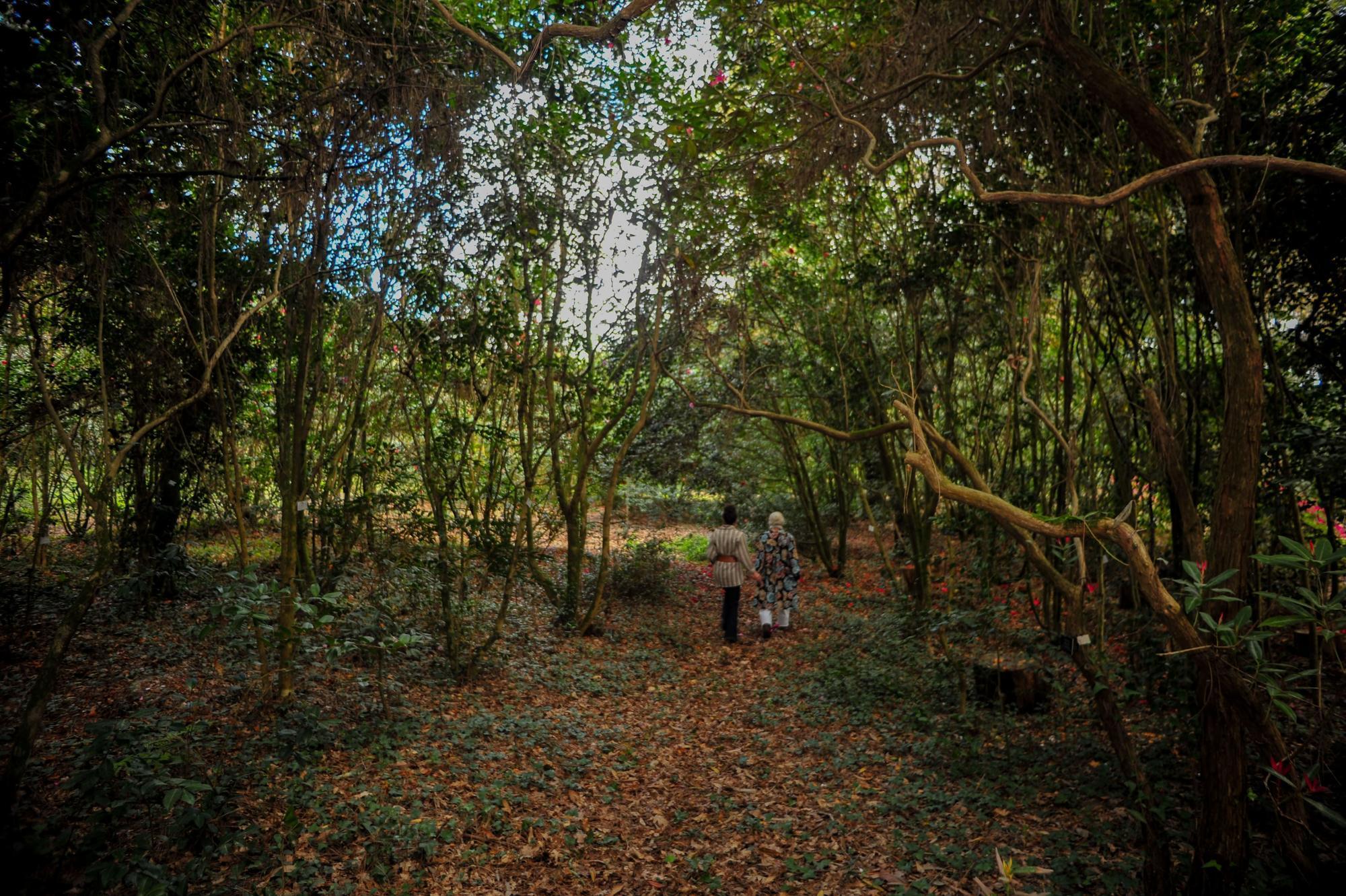 Un paseo por los jardines de Pazo de La Saleta.