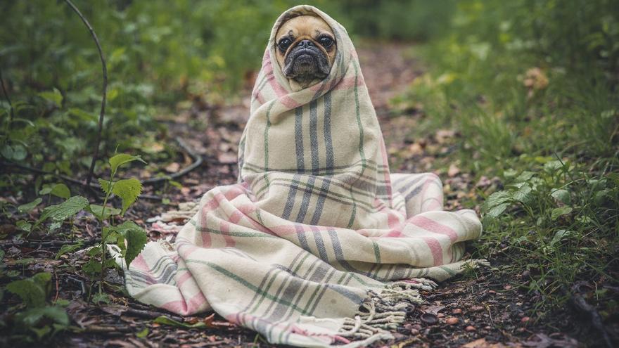 Diez cosas que tu perro odia que hagas
