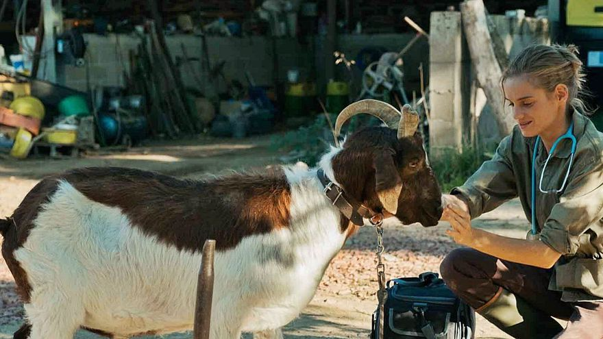 De guerreros a veterinarios rurales