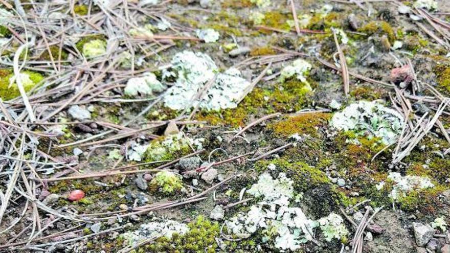 El sòl, tresor de biodiversitat