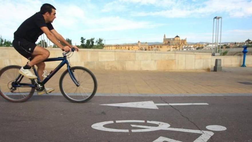 Las obras de 3,2 kilómetros de carril bici atraen a 55 empresas