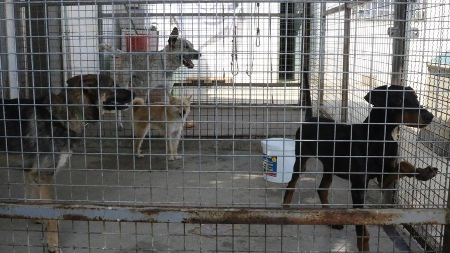 Gadis inicia una campaña de recogida de alimentos en Zamora para protectoras de animales