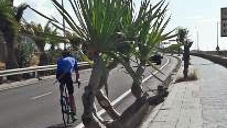 El Cabildo anuncia que mejorará el paisaje de la carretera de San Andrés