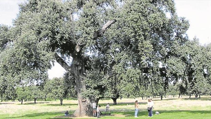 Árbol notable antes que árbol singular