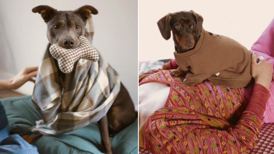 La moda pet-a-porter, lo último de Zara para mascotas