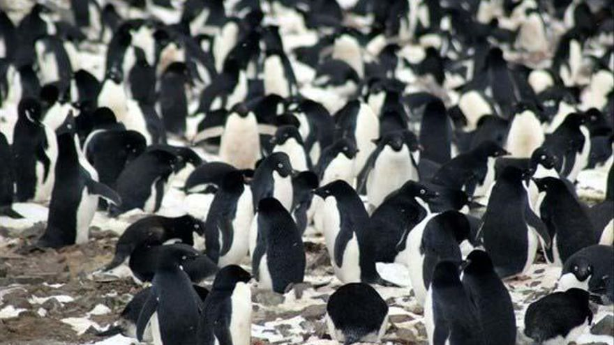 Encuentran un millón y medio de pingüinos en la Antártida