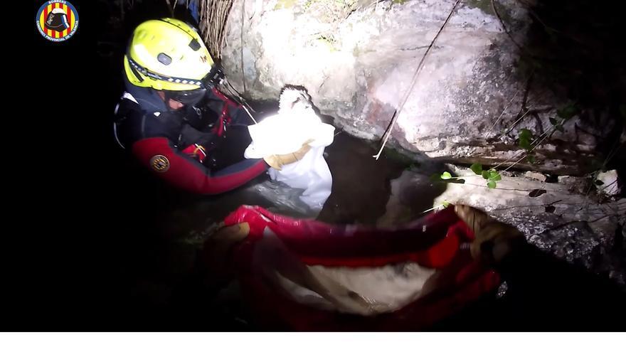 Rescatan a un águila pescadora en el río Albaida a su paso por Xàtiva