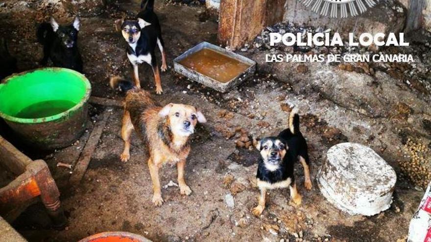 Detenido por abandonar 14 perros durante un mes y medio en Canarias