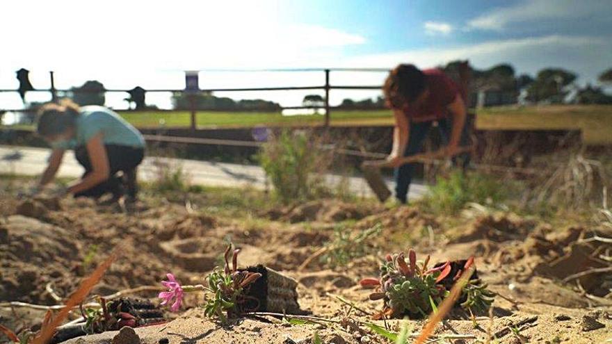 Un planter per a salvar les plantes en extinció