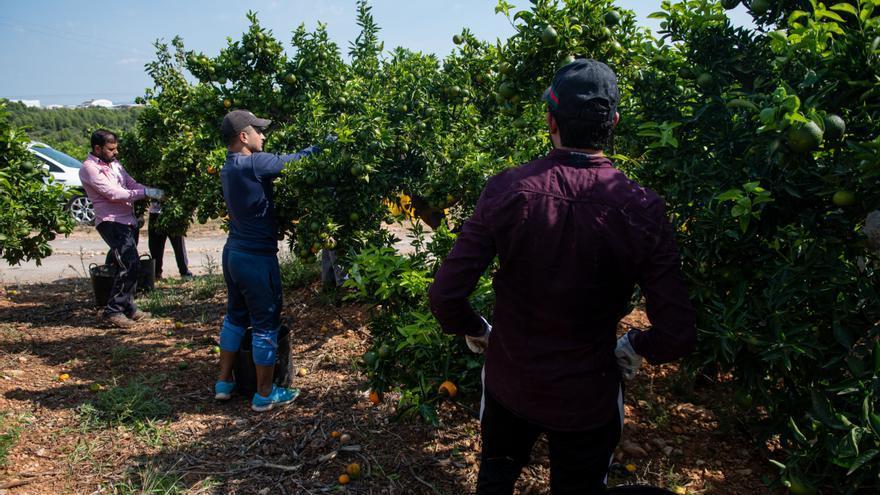 Castellón presiona a Europa para frenar la entrada de naranja de Sudáfrica