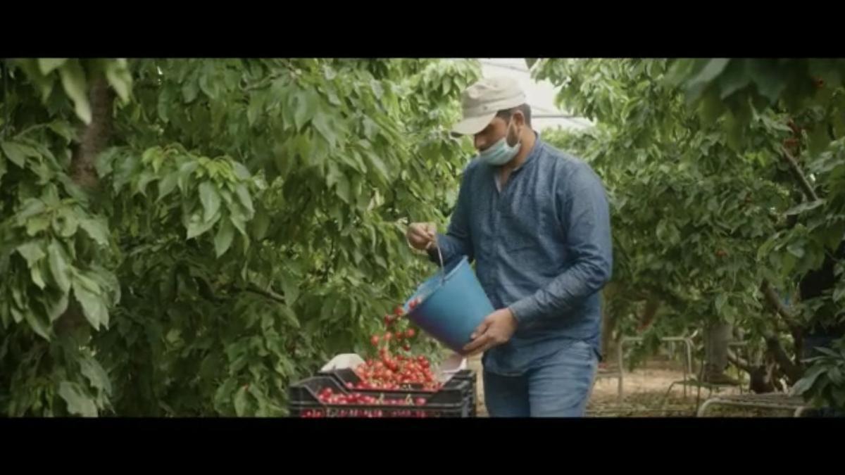Un temporero recoge fruta en una explotación aragonesa (imagen del spot promocional)