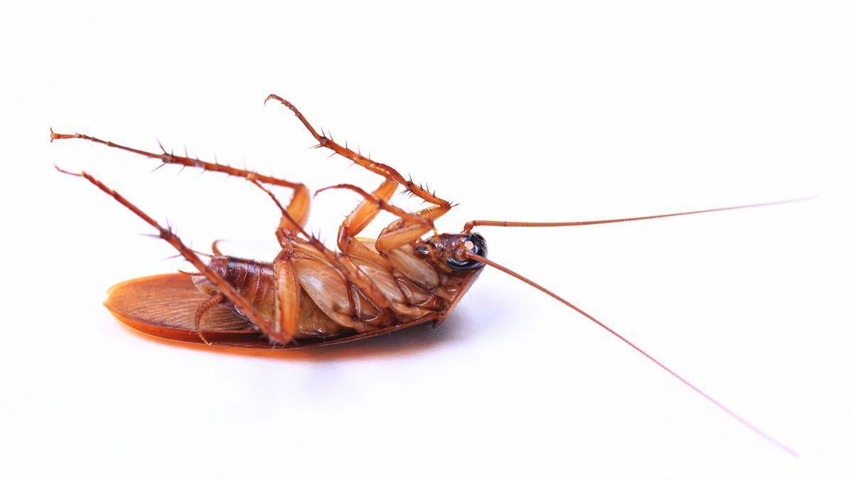 Una repugnante cucaracha.