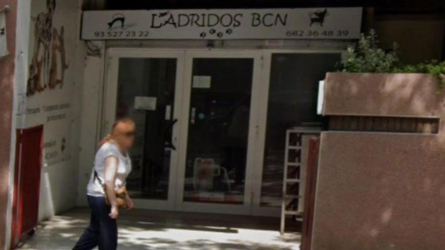 Denuncien una botiga amb cadells malalts i 18 gossos morts a Barcelona