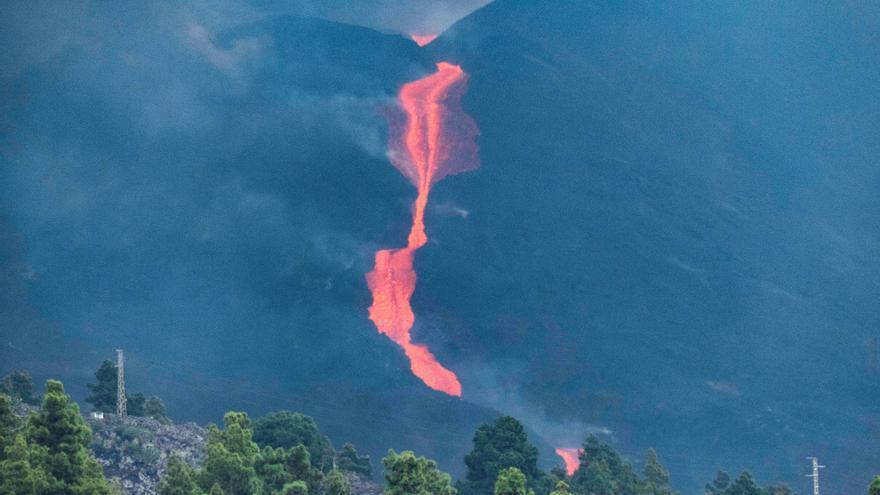 Los animales se acostumbran a convivir con el volcán en La Palma