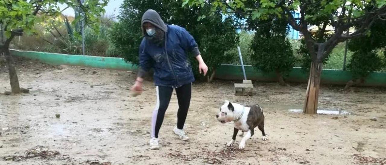 Una persona con un perro en un albergue de animales de la provincia.