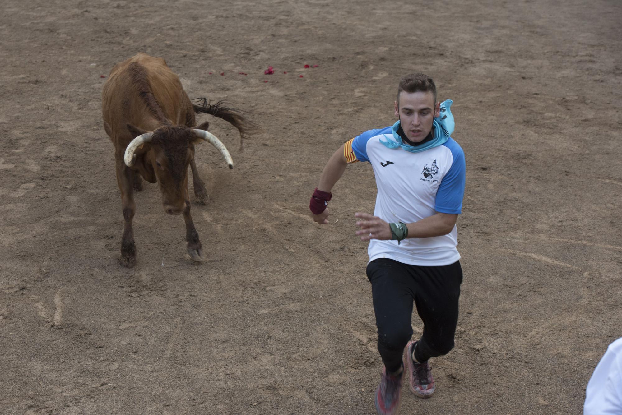 Les millors imatges del Corre de Bou de Cardona