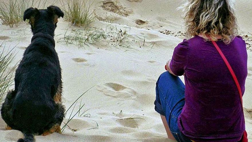 Un veterinari castelloní estén la seva preocupació per una malaltia de gossos