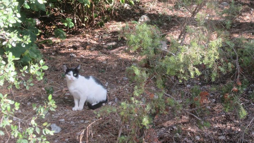 La protectora pide voluntariado para el control de las colonias felinas en Burjassot
