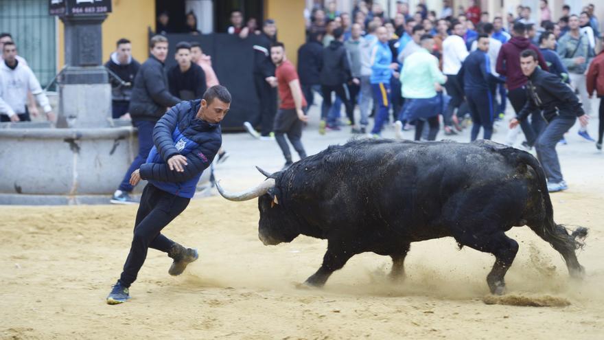 Agricultura ultima la concesión de 850.000 euros en ayudas para las ganaderías de bous
