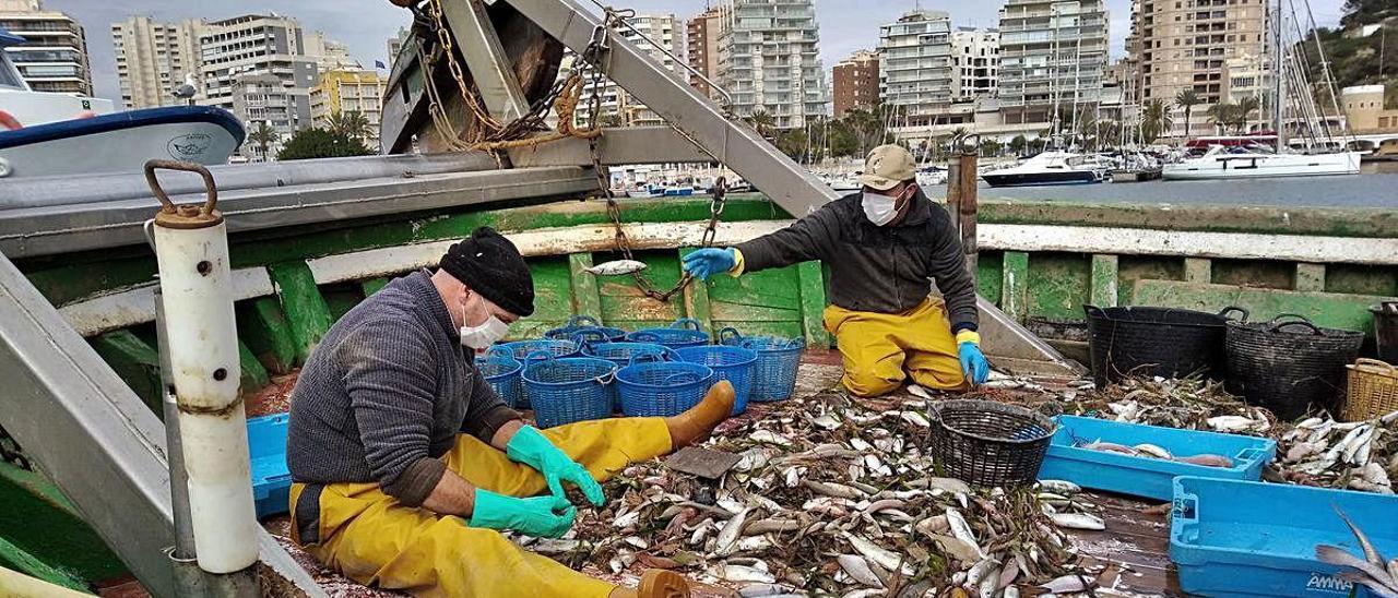 Dos pescadores limpian las capturas en la cubierta de su barco tras llegar al puerto de Calp.