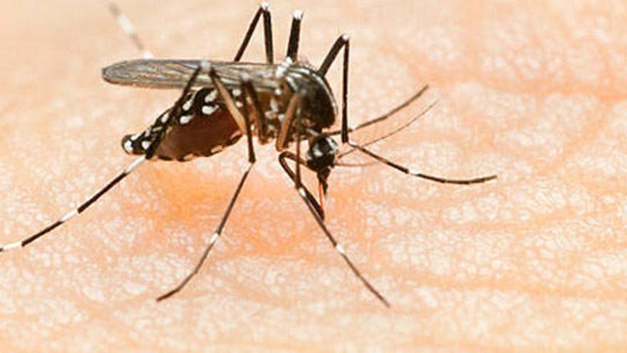 Detecten el primer cas de dengue autòcton a Catalunya