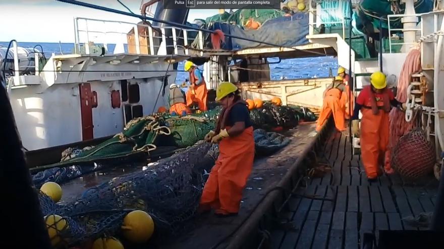 Pescanova prosigue con la reducción de su perímetro y pone en venta la filial Belnova