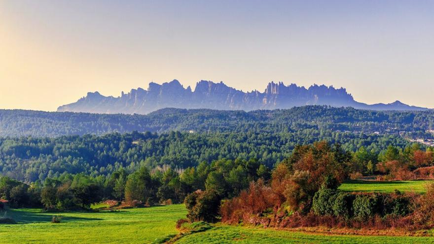 Alerta en Cataluña: la ausencia de lluvias amenaza a los bosques