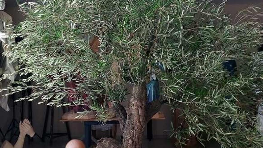 Un olivo para llevar a costal