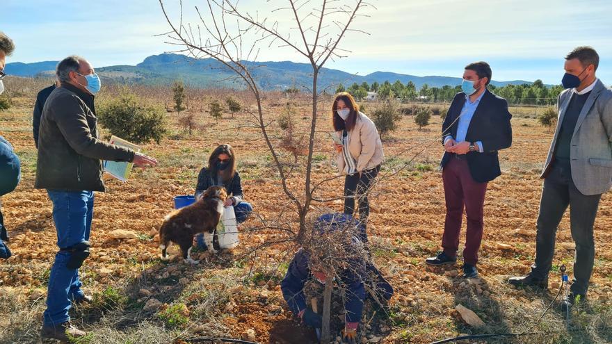 El cultivo de trufa negra, contra la despoblación de la Región