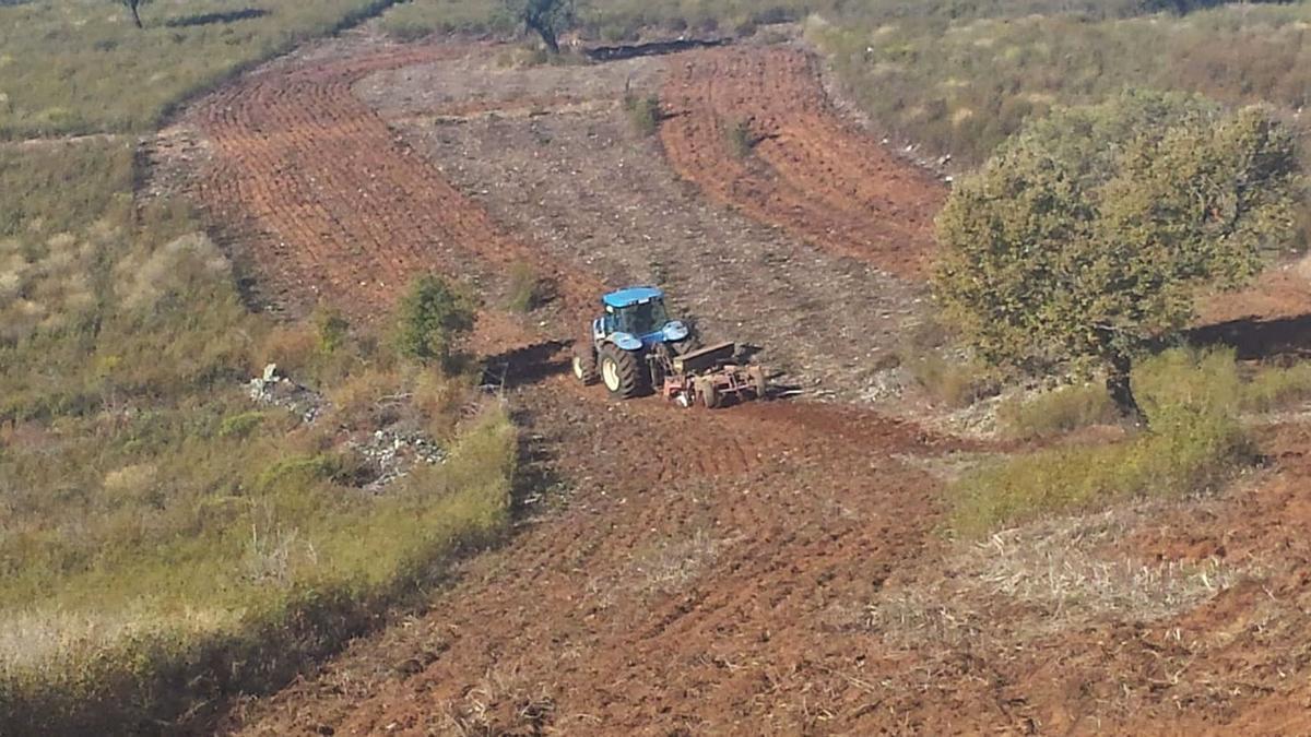 Trabajos de arado y sembrado de fincas en Videmala para proporcionar alimento a los animales cinegéticos. | Cedida