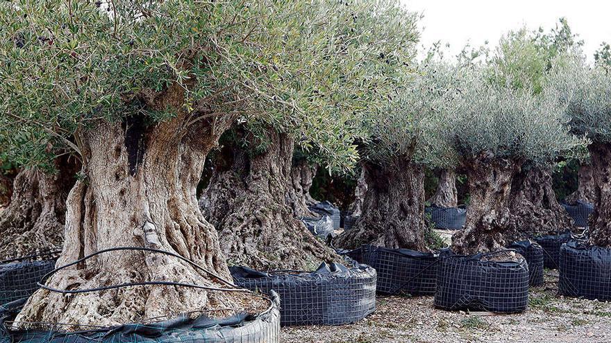 Das sind die Pflanzen mit Zukunft in den Gärten auf Mallorca