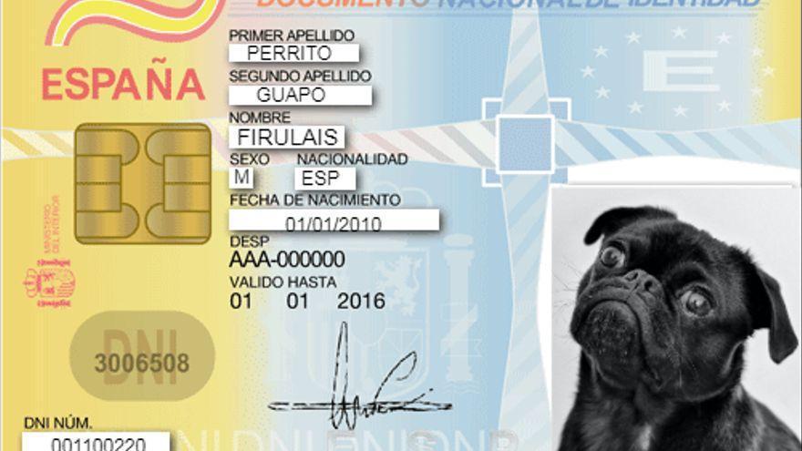 En 2022 será obligatorio que tu perro o gato tenga un DNI animal