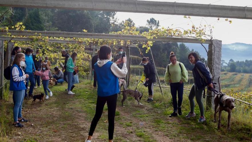 Meis ensalza sus vinos y estrena el nuevo mercado de Mosteiro