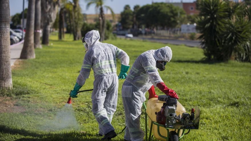 El primer caso de virus del Nilo detectado este año en España, ingresado en una UCI de Sevilla