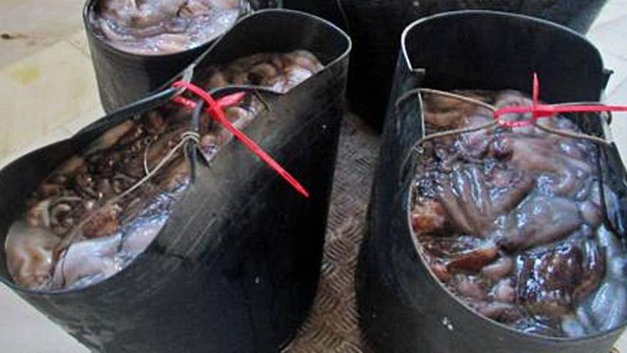 Detenido tras cazar casi 200 kilos de pulpo en Águilas