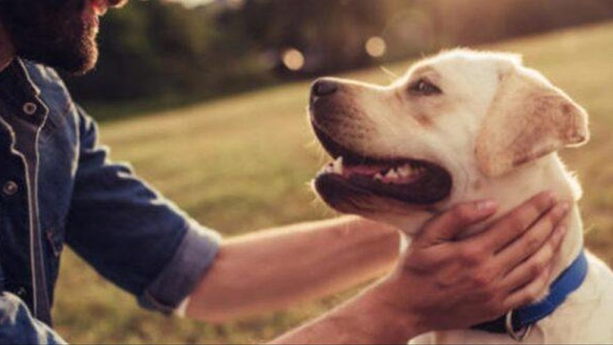 El olfato canino, la pieza clave para la detección temprana de cáncer de próstata